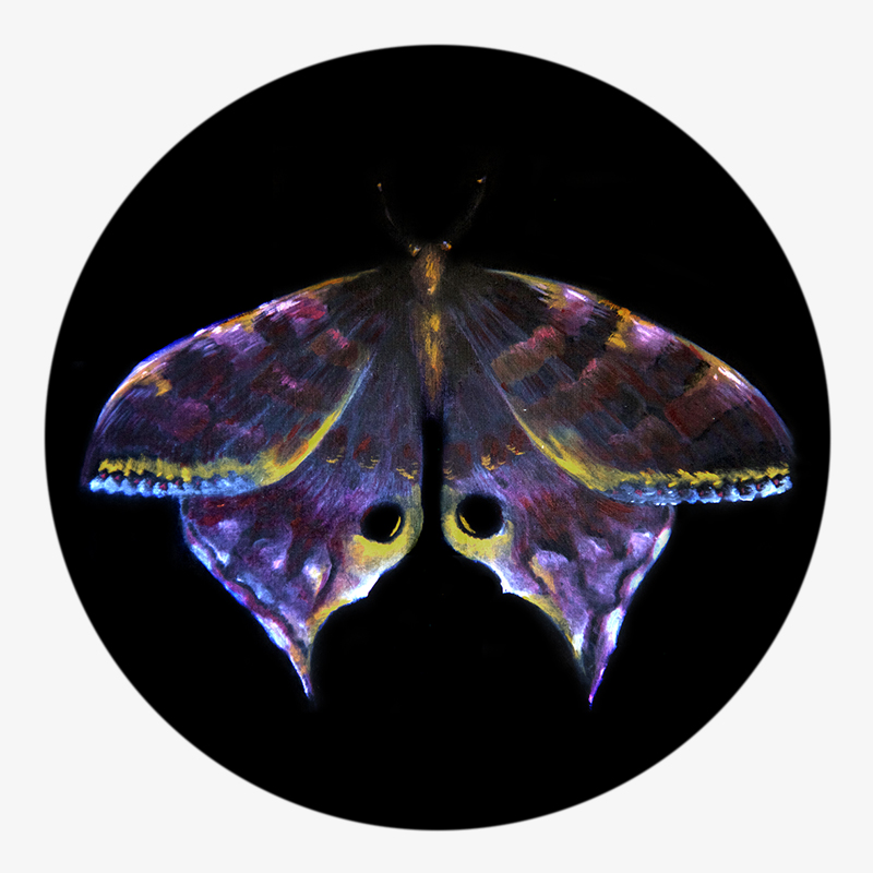 Visual 01 of the Métamorphose collection