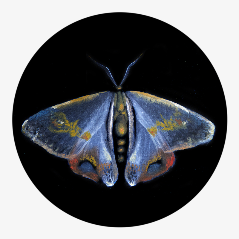 Visuel 02 de la collection Métamorphose