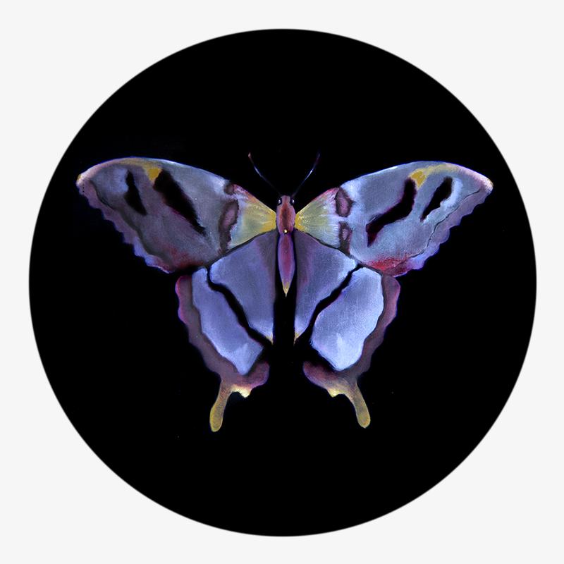 Visuel 03 de la collection Métamorphose
